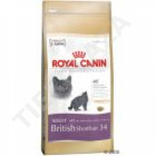 royal canin feline breed british shorthair 34 tierplaza. Black Bedroom Furniture Sets. Home Design Ideas